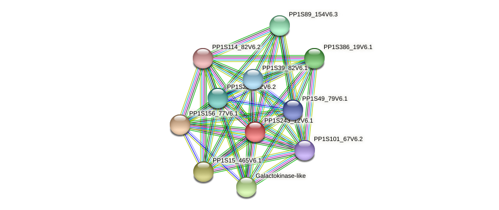 PP1S243_12V6.1 protein (Physcomitrella patens) - STRING interaction network