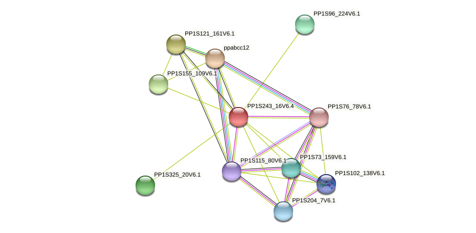 PP1S243_16V6.1 protein (Physcomitrella patens) - STRING interaction network