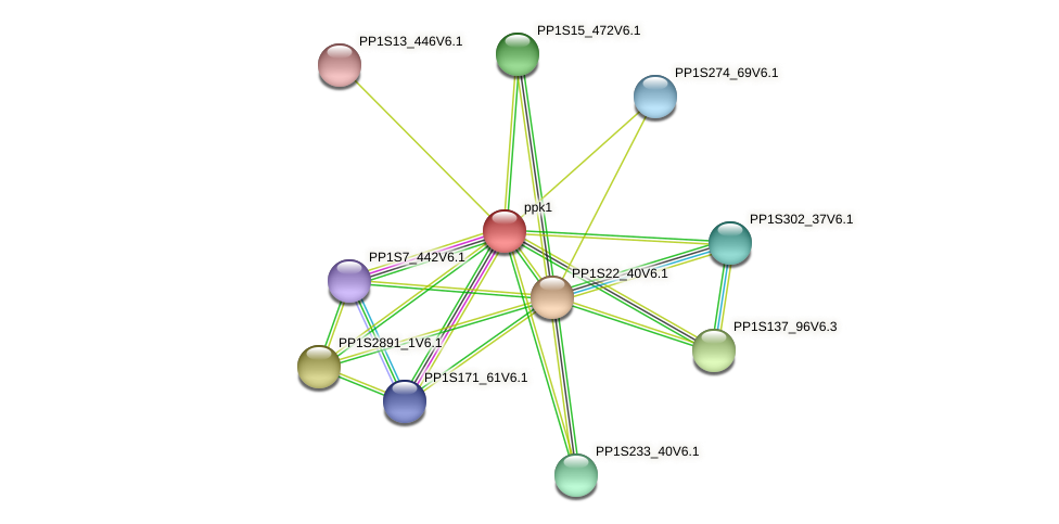 ppk1 protein (Physcomitrella patens) - STRING interaction network