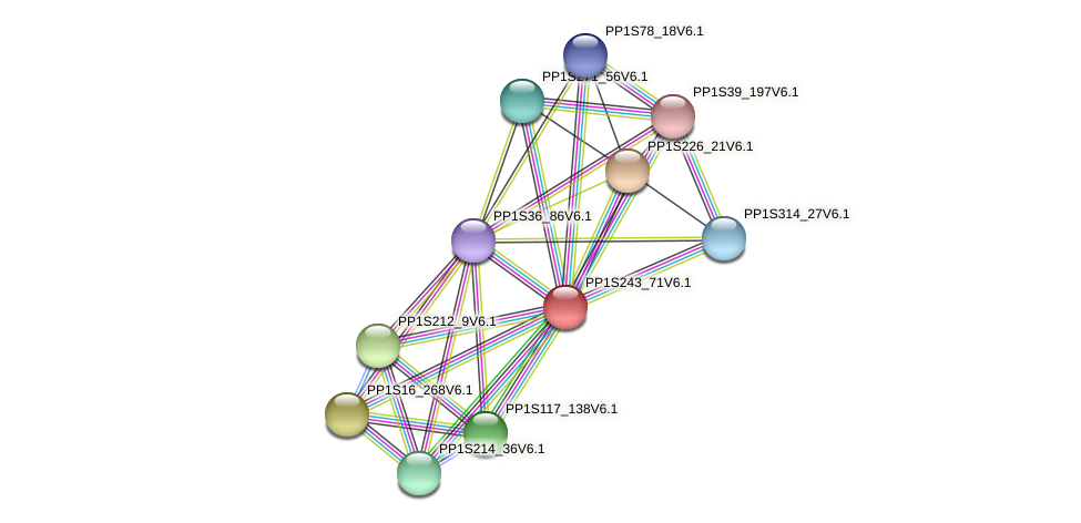 PP1S243_71V6.1 protein (Physcomitrella patens) - STRING interaction network