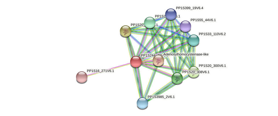 PP1S244_70V6.1 protein (Physcomitrella patens) - STRING interaction network