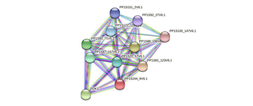 PP1S244_9V6.1 protein (Physcomitrella patens) - STRING interaction network