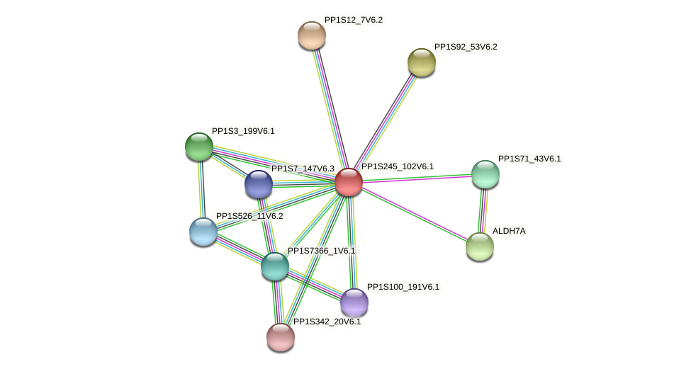 PP1S245_102V6.1 protein (Physcomitrella patens) - STRING interaction network