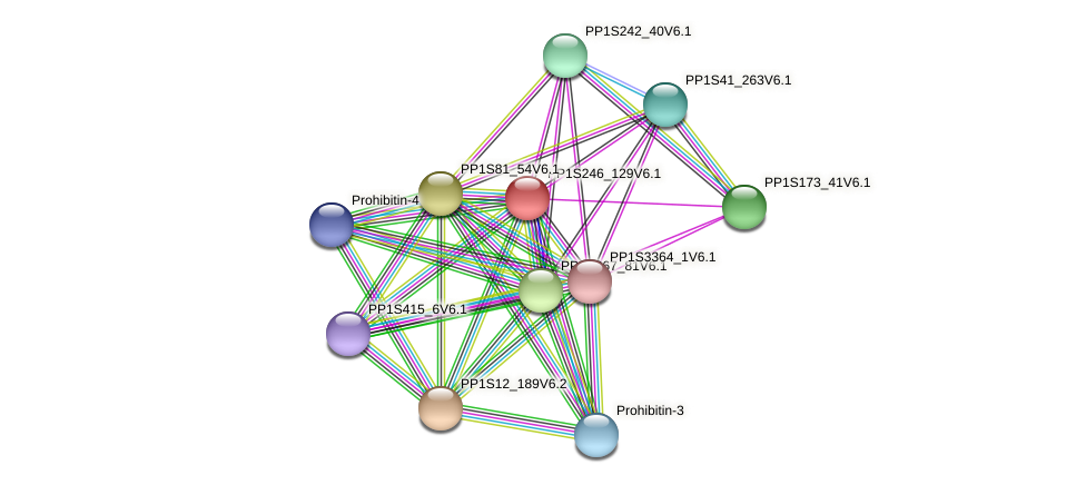 PP1S246_129V6.1 protein (Physcomitrella patens) - STRING interaction network
