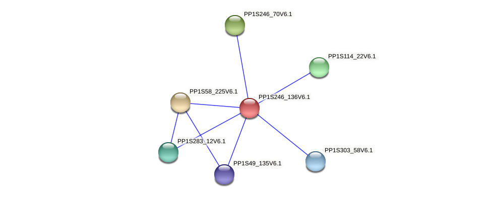 PP1S246_136V6.1 protein (Physcomitrella patens) - STRING interaction network
