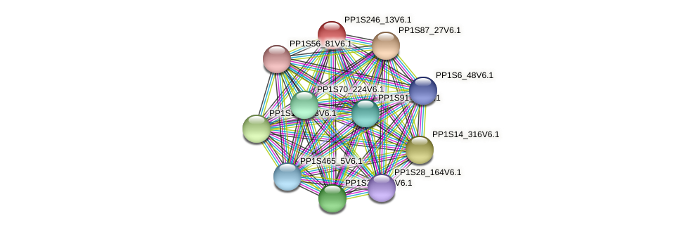 PP1S246_13V6.1 protein (Physcomitrella patens) - STRING interaction network