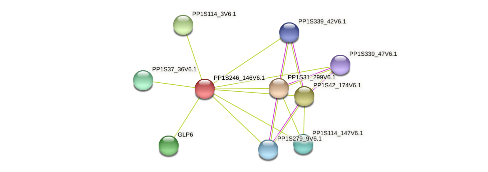 PP1S246_146V6.1 protein (Physcomitrella patens) - STRING interaction network