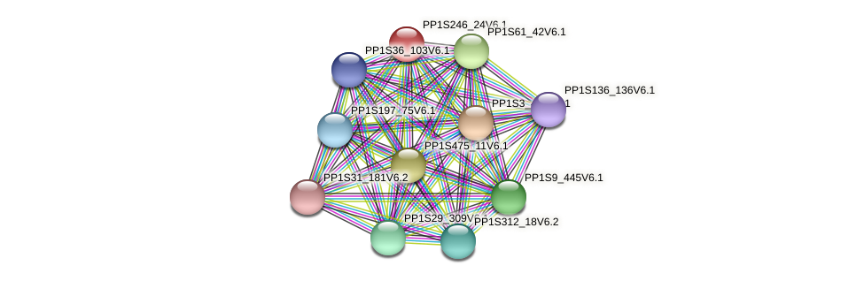 PP1S246_24V6.1 protein (Physcomitrella patens) - STRING interaction network