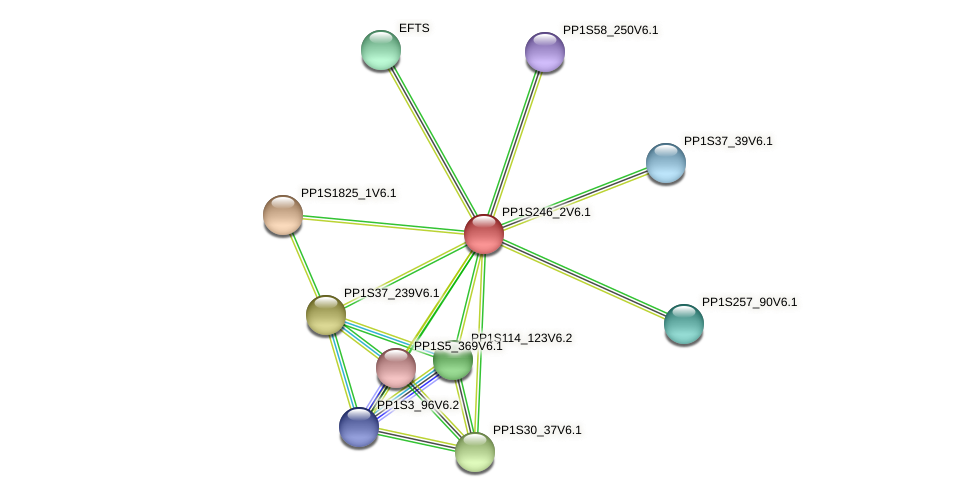 PP1S246_2V6.1 protein (Physcomitrella patens) - STRING interaction network
