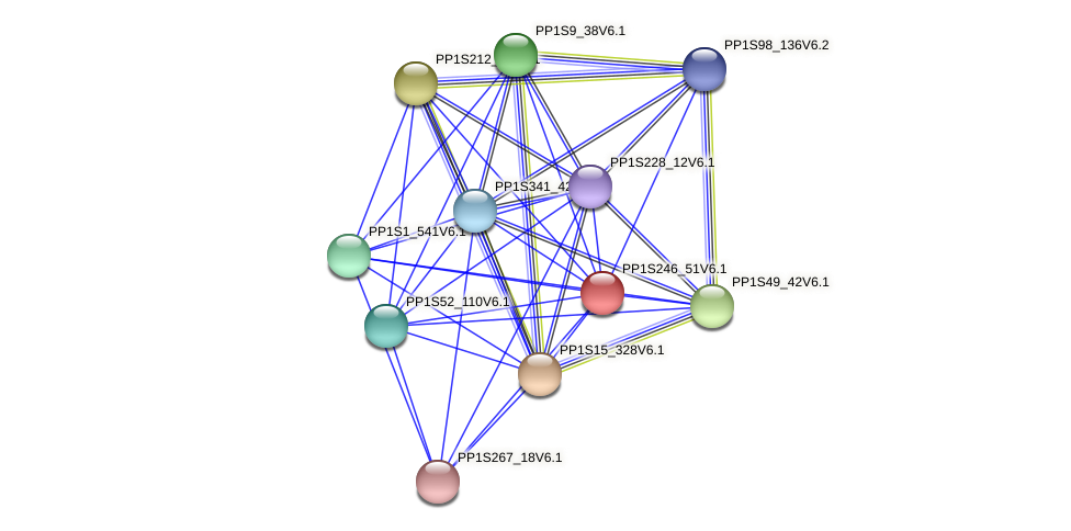 PP1S246_51V6.1 protein (Physcomitrella patens) - STRING interaction network