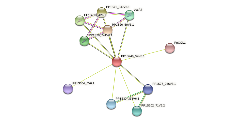 PP1S246_54V6.1 protein (Physcomitrella patens) - STRING interaction network