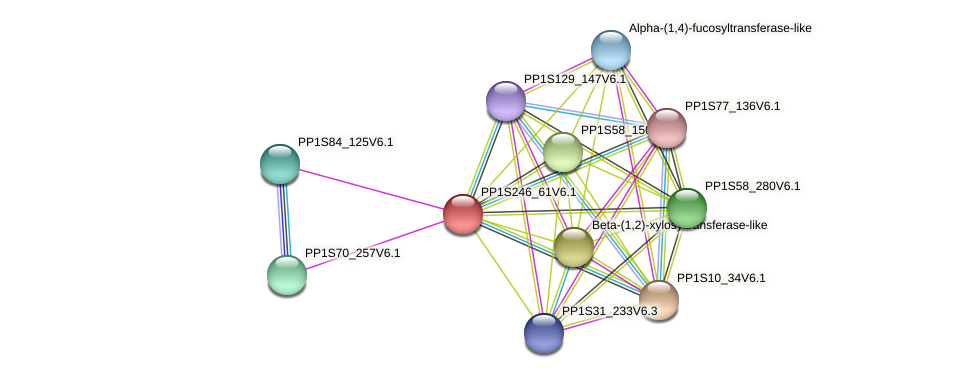 PP1S246_61V6.1 protein (Physcomitrella patens) - STRING interaction network
