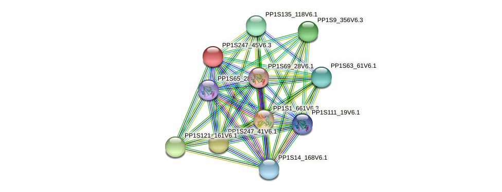 PP1S247_45V6.2 protein (Physcomitrella patens) - STRING interaction network