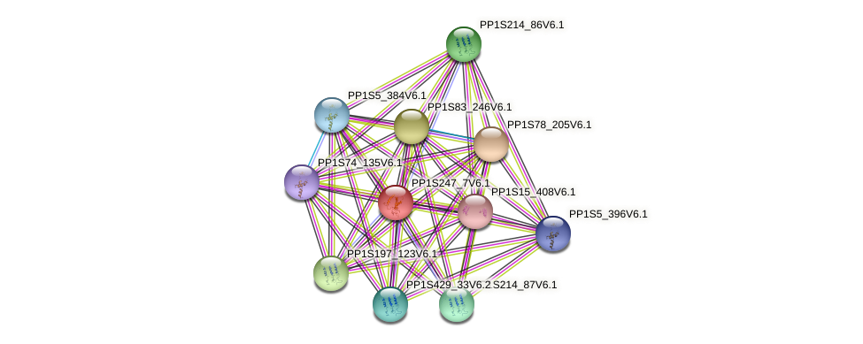 PP1S247_7V6.1 protein (Physcomitrella patens) - STRING interaction network