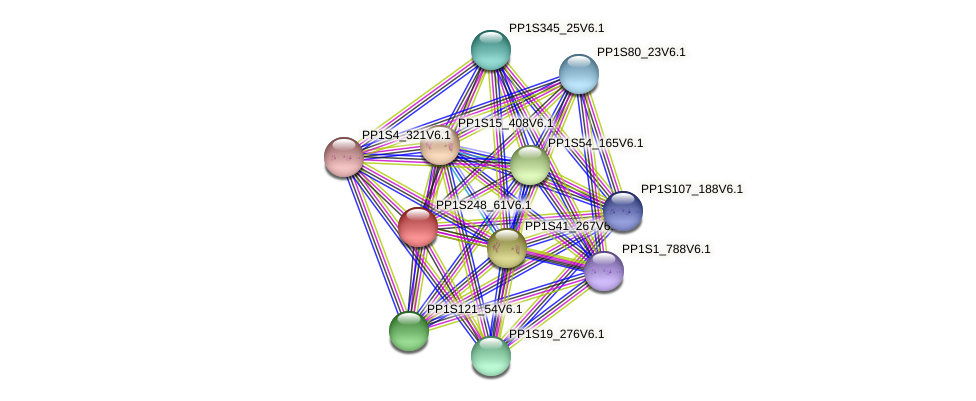 PP1S248_61V6.1 protein (Physcomitrella patens) - STRING interaction network