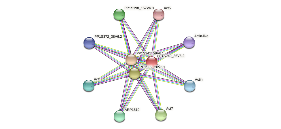 PP1S249_36V6.1 protein (Physcomitrella patens) - STRING interaction network
