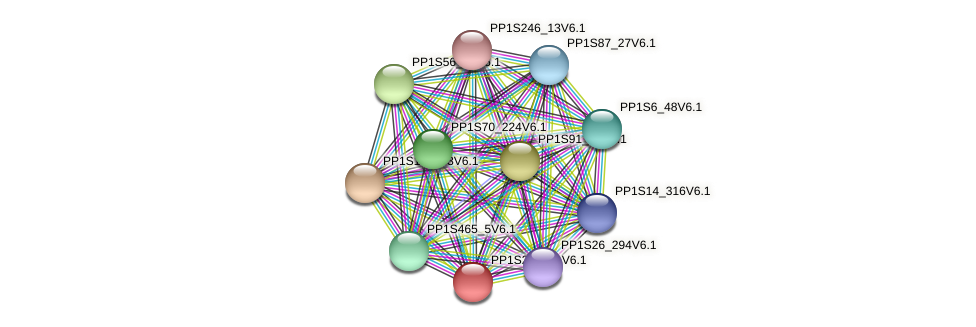 PP1S24_181V6.1 protein (Physcomitrella patens) - STRING interaction network