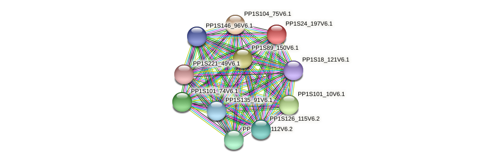 PP1S24_197V6.1 protein (Physcomitrella patens) - STRING interaction network