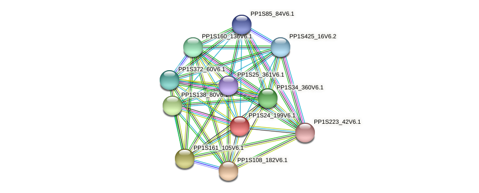 PP1S24_199V6.1 protein (Physcomitrella patens) - STRING interaction network