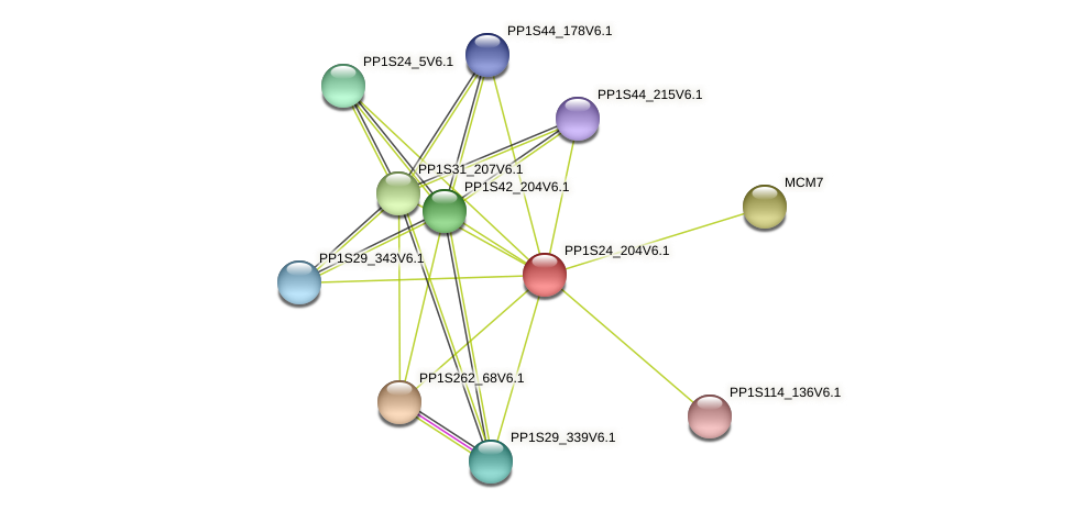 PP1S24_204V6.1 protein (Physcomitrella patens) - STRING interaction network