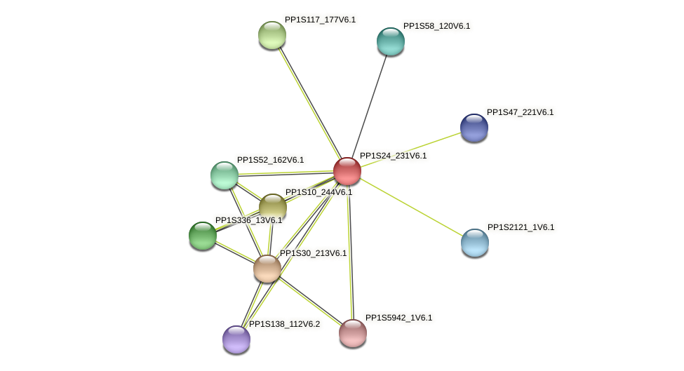 PP1S24_231V6.1 protein (Physcomitrella patens) - STRING interaction network
