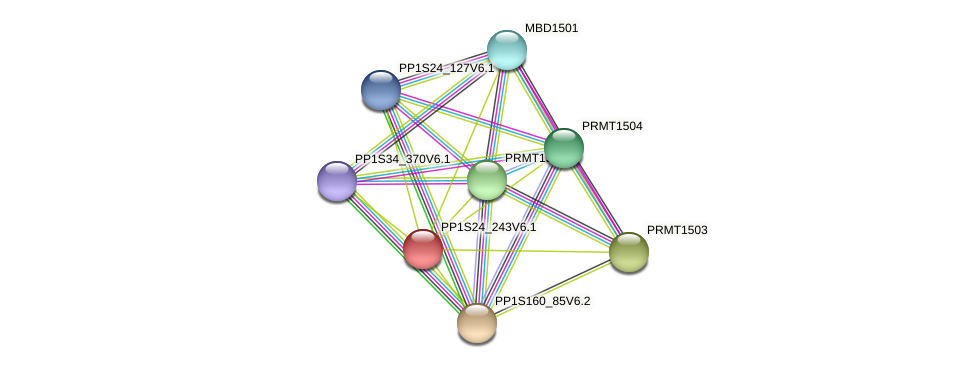 PP1S24_243V6.1 protein (Physcomitrella patens) - STRING interaction network