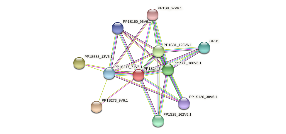 PP1S24_5V6.1 protein (Physcomitrella patens) - STRING interaction network