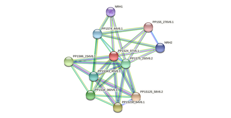 PP1S24_97V6.1 protein (Physcomitrella patens) - STRING interaction network