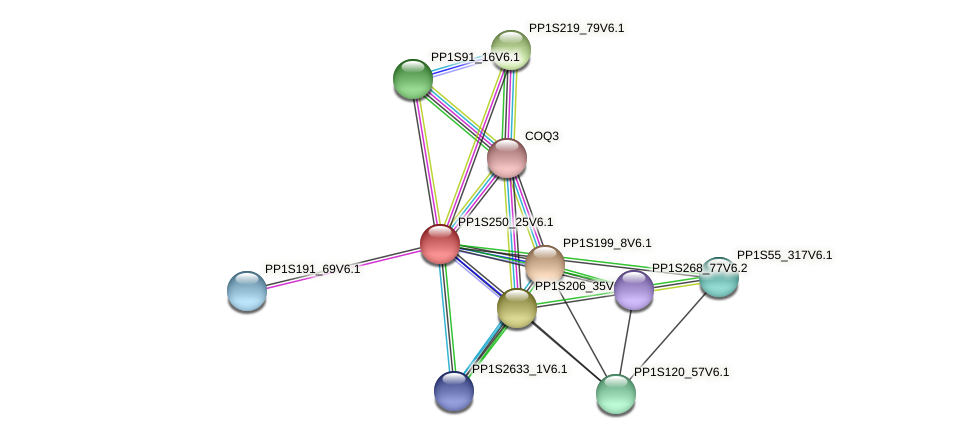 PP1S250_25V6.1 protein (Physcomitrella patens) - STRING interaction network