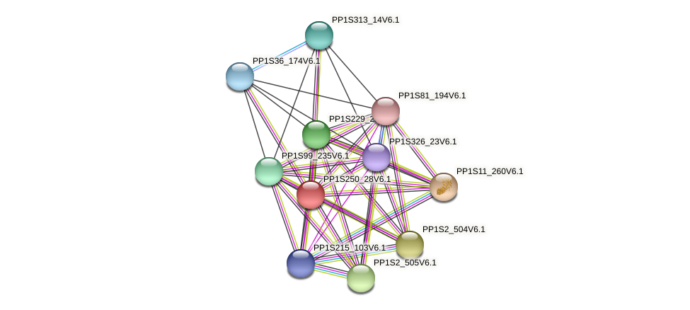 PP1S250_28V6.1 protein (Physcomitrella patens) - STRING interaction network