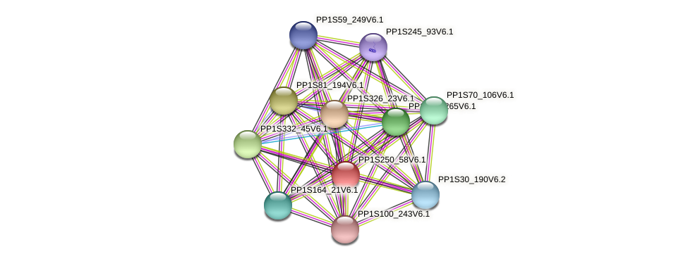 PP1S250_58V6.1 protein (Physcomitrella patens) - STRING interaction network
