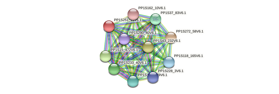 PP1S251_13V6.1 protein (Physcomitrella patens) - STRING interaction network