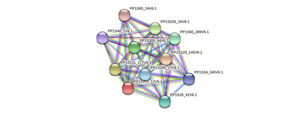 PP1S251_17V6.1 protein (Physcomitrella patens) - STRING interaction network