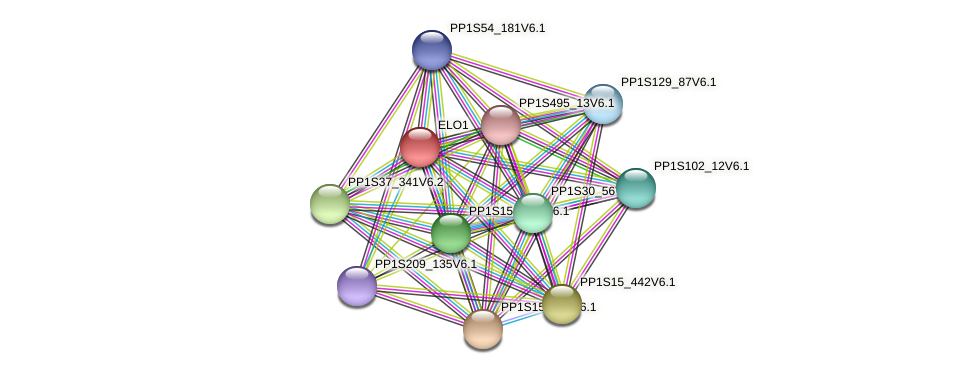 PP1S251_26V6.1 protein (Physcomitrella patens) - STRING interaction network