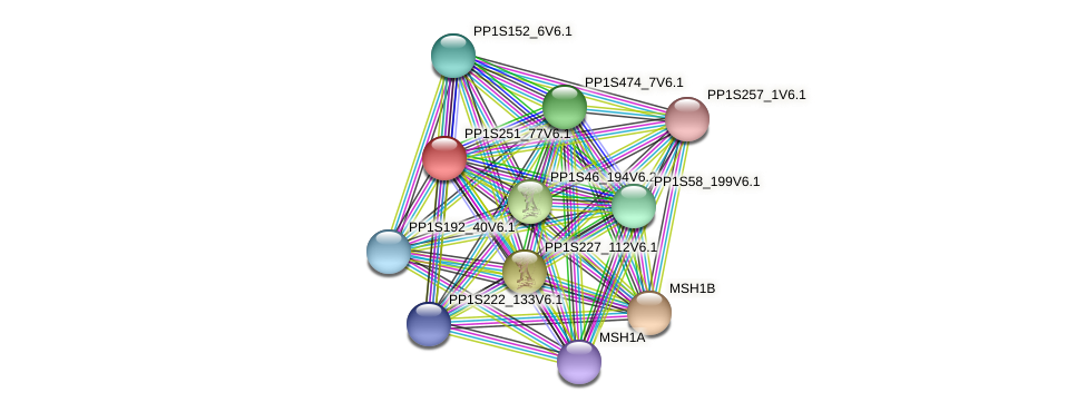 PP1S251_77V6.1 protein (Physcomitrella patens) - STRING interaction network