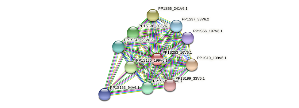 PP1S253_16V6.1 protein (Physcomitrella patens) - STRING interaction network