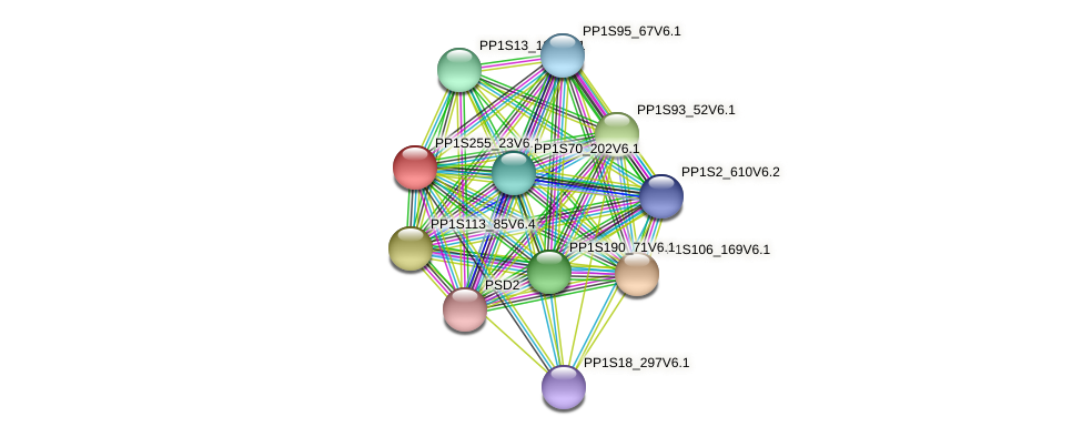PP1S255_23V6.1 protein (Physcomitrella patens) - STRING interaction network