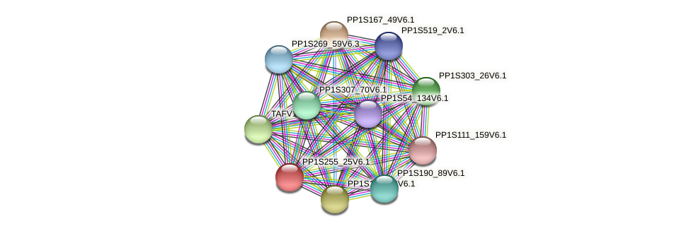 HAF1502 protein (Physcomitrella patens) - STRING interaction network