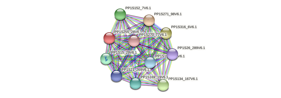 PP1S255_28V6.1 protein (Physcomitrella patens) - STRING interaction network