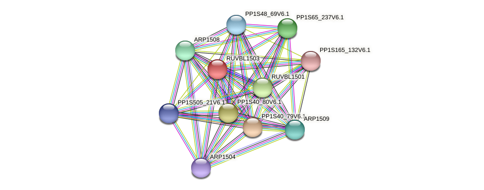RUVBL1503 protein (Physcomitrella patens) - STRING interaction network