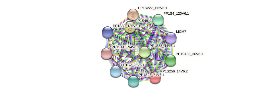 PP1S256_14V6.2 protein (Physcomitrella patens) - STRING interaction network