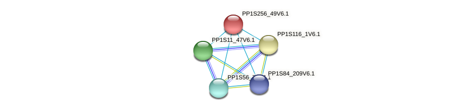 PP1S256_49V6.1 protein (Physcomitrella patens) - STRING interaction network