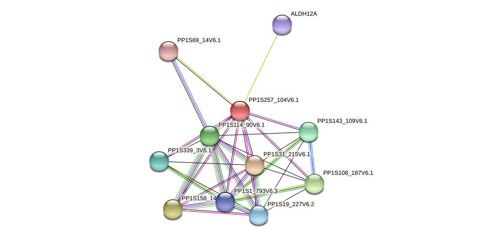 PP1S257_104V6.1 protein (Physcomitrella patens) - STRING interaction network