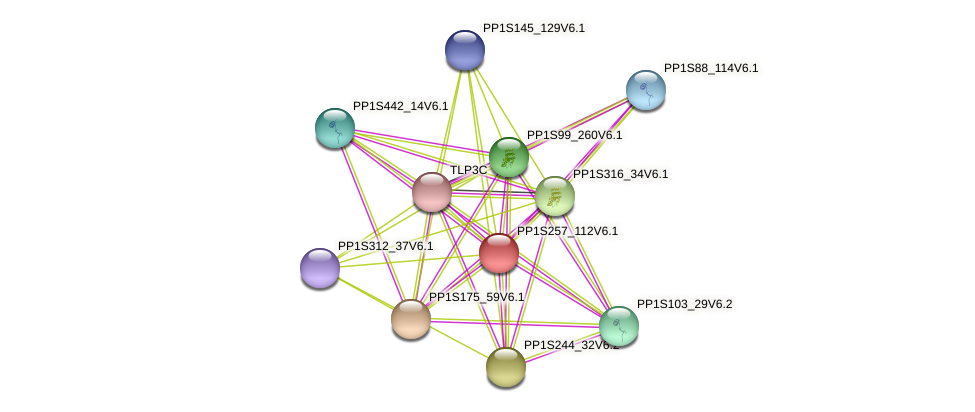 PP1S257_112V6.1 protein (Physcomitrella patens) - STRING interaction network
