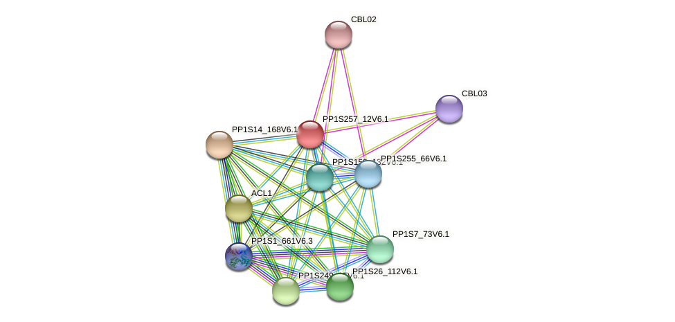 PP1S257_12V6.1 protein (Physcomitrella patens) - STRING interaction network