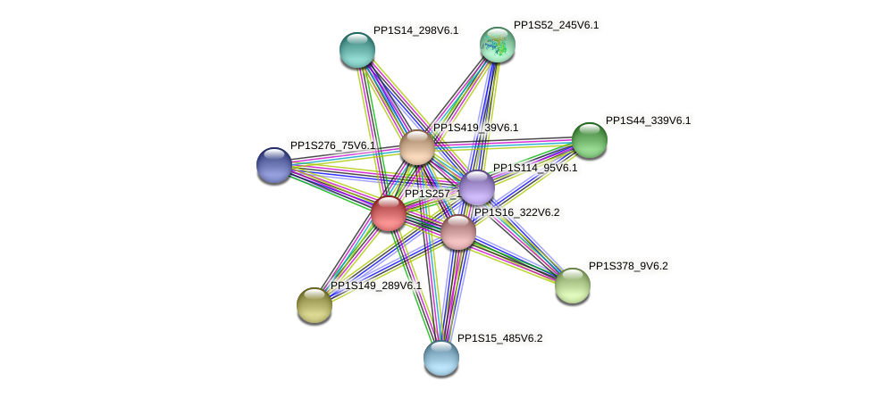 PP1S257_13V6.1 protein (Physcomitrella patens) - STRING interaction network