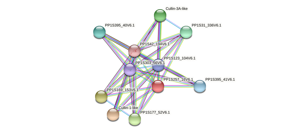 PP1S257_16V6.1 protein (Physcomitrella patens) - STRING interaction network