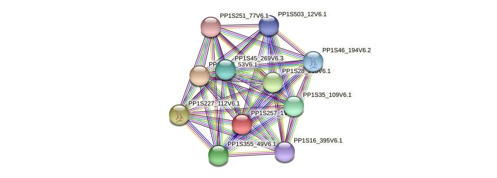 PP1S257_1V6.1 protein (Physcomitrella patens) - STRING interaction network