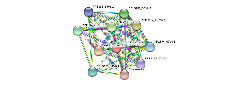 PP1S257_20V6.1 protein (Physcomitrella patens) - STRING interaction network
