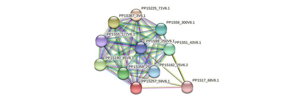 PP1S257_59V6.1 protein (Physcomitrella patens) - STRING interaction network